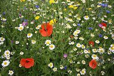 Garden Cornfield Annuals Seed Mix Summer Flowering UK Native Wild Flowers