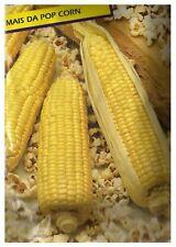 Semi MAIS da Pop Corn
