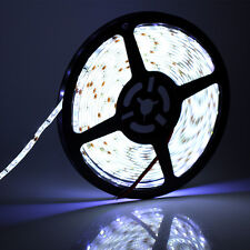 DUMVOIN SMD 3528 / 5M 300 LEDs Strip Light Tape / IP65 Waterproof /Cool White