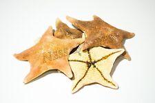 "Bat Starfish Sea Shell Beach Wedding Real Craft 3"" - 4"" (4 Pcs)"