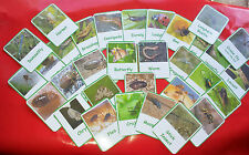 INSECTS / MINI BEASTS - 32 FLASH CARDS - NATURE / CLASS/ HOME/ CHILDMINDER/ EYFS