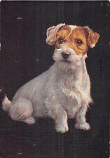 POSTCARD  ANIMALS   DOGS   Sealyham  Puppy