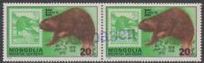 Specimen, Mongolia Sc1019 Wildlife, Rodent, Capex 78, Eurasian Beaver, Pair