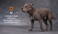Mr.Z 1/6 American Staffordshire Terrier Dog Pet Animal Decor Toys Fast Shipping