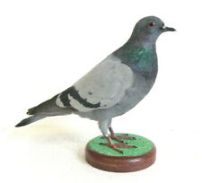 Taxidermy : Amazing Rock Dove Pigeon with base - real bird Pheasant