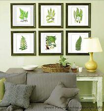 Fern Prints set of 6 unframed Green Antique Botanical Victorian Art Wall decor
