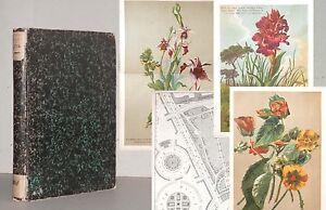 NEUBERT Deutsches Garten-Magazin 1884 Litho-Tafeln Botanik