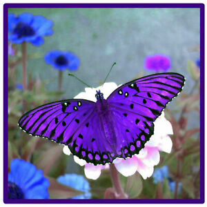 PURPLE BUTTERFLY - SET OF 4 NOVELTY FUN COASTERS - BRAND NEW / GIFTS
