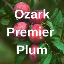 "3 OZARK PREMIER PLUM FRUIT TREE Cutting Rooting Grafting Scion PLUM  10-12"""