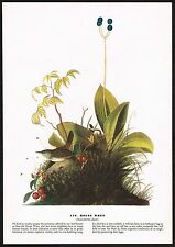 1930s Original Vintage Audubon House Wren Bird Limited Edition Art Print