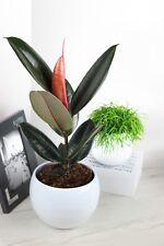 Zimmerpflanzen Happy SALE 10 Pflanzen zum Spitzenpreis Rabatt Kakteen Orchideen
