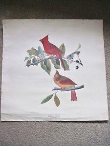 """Vintage Audubon Print Cardinal Grosbeak  19 ½"""" x 19"""