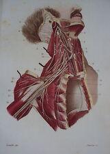 GRAVURE 19 EME ANATOMIE NEVROLOGIE PORTION PROFONDE DU PLEXUS CERVICAL
