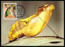 PAPUA NEW GUINEA MK SCHMETTERLINGE BUTTERFLY BUTTERFLIES MAXIMUM CARD MC CM bh05