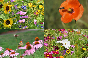 Wild Flower Seeds Help Save The Bees Wildflowers Wildflower Meadow Mix 10g