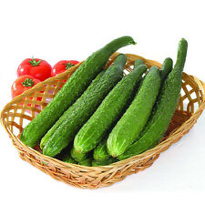 100PCS Cucumber Cuke Cucumis Sativus Organic Vegetables Seeds Home Garden BT118