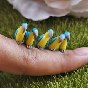 1:12 Miniature Dollhouse Clay Blue Yellow Parrot 5 Birds Figurine Handmade Decor