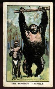 Tobacco Card, Carreras, RIPLEYS BELIEVE IT OR NOT, 1934, Manbuti Pygmies, #8