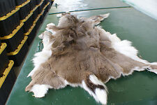 Whitetail deer hide hair-on soft white leather tanning for hunting decor room.