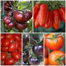 Tomaten Samen Kombi-Paket 5 Tomatensorten