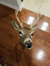 Shoulder Mount 8 Point White Tail Deer Real Antler Buck Doe Taxidermy. Vintage