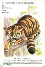 Chat Sauvage Felis silvestris Wildcat  PLAYING CARD CARTE A JOUER OLD ANCIEN