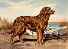 Golden Retriever - Dog Art Print - Megargee Matted