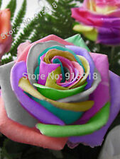 50 pcs Semillas Rosa Rainbow Cream Rose Seeds
