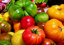 "Tomato ""Heritage Rainbow Mix"" 10 Different Varieties Of Heirloom Tomato Seeds!!!"