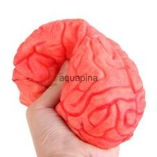 Haunted House HUMAN BRAIN Organs Body Parts Halloween Horror Prop
