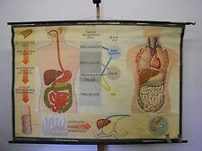 Wandbild Ernährung Zahn Magen Darm Doktor 169x114cm vintage doc wall chart ~1960