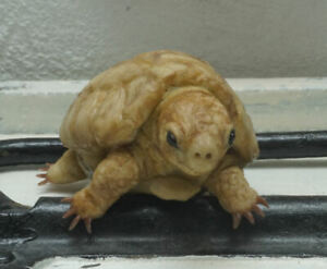 turtle baby animal reptile fullbody silicone handmade by I. Orgus