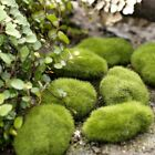 Ant House Artificial Mini Moss Stone For Ant Farm Nest Landscape Decoration New