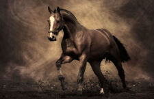Large Framed Print - Brown Horse Trotting in the Dirt (Picture Poster Animal Art