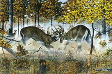 """ FATAL ATTRACTION "" Whitetail Deer Print by Charles Denault - Battling Bucks"