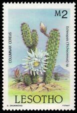 "LESOTHO 519 (SG681) - Columnar Cereus ""Echinopsis speciosus"" (pa45264)"