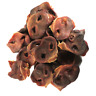 Pig Snouts 100% Naturally Air Dried Dog Treat Chew (Choose your Size)