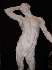 "Anatomy Muscular Human Figure Ecorche Sculpture Skeleton Model Drawing Art 35"""