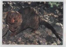 1993 CARDZ San Diego Zoo #35 Dwarf Mongoose Non-Sports Card 0b6