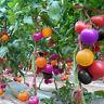 100Pcs Rainbow Tomato Seeds Colorful Bonsai Organic Vegetables and Fruits