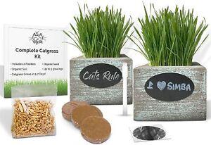 Organic Cat Grass Seeds Wheatgrass Growing Kit w/2 x Rustic Wood Planters Gift