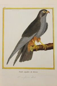 Martinet's Birds - Singular variety of the Hobereau - Ornithology - 1770 PL.431