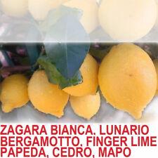 pianta albero di limoni limone lunario zagara bianca femminiello sfusato costier