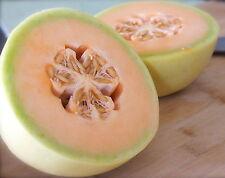 Fruit Seed MUSKMELON - Cucumis melo - Kharbuja / Cantaloupes - Pack of 25 Seeds.