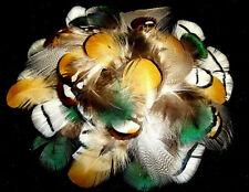 Mix 3 Peacock, Reeves, Amherst Pheasant, Mallard Plumage Feathers-US Seller