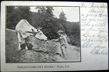 "NAPA CA~1900's ""SOLID COMFORT HOME""~ Little Boy Feeding Cow"
