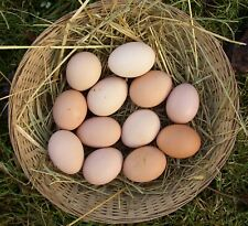 Eddingtons Mill House HEN /& Coquelet Egg Cup seau Seaux-Set de quatre-Vert