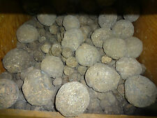 BEAUTIFUL LAS CHOYAS  MEXICAN COCONUT AGATE GEODES BY THE POUND