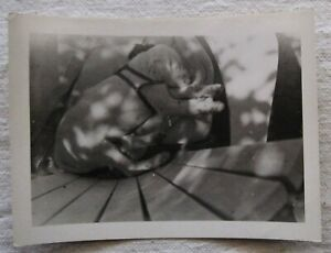 Vintage Photo*Sleeping Spaniel Puppy in Chair*1950s*B&W*abstract*dog*snapshot