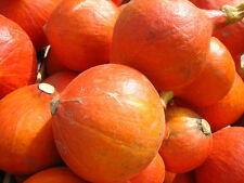 5 semillas Hokkaido-calabaza uchiki kuri buenas campamento capacidad kastanienkürbis